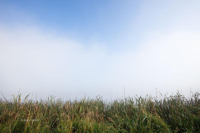 fog, reeds, Colorado, photo